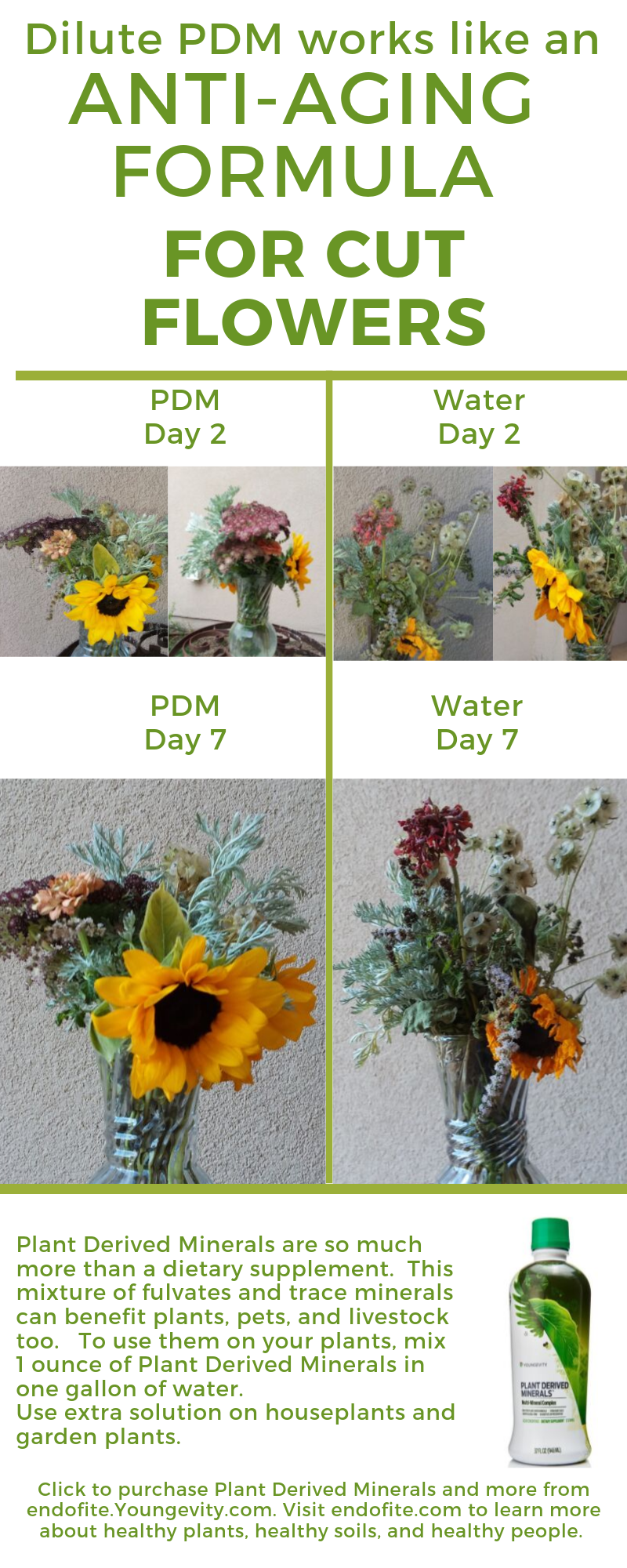 Photo compares cut flowers stored in water to cut flowers kept in Youngevity Plant Derived Minerals. Purchase Plant Derived Minerals by clicking on the image,