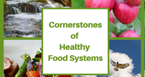 Image shows a model of healthy food systems based on 4 cornerstones of a clean environment, regenerative agriculture, nutritional health, and freedom.